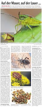 wanzen nabu die neue westfälische berichtet über neuigkeiten aus der bielefelder