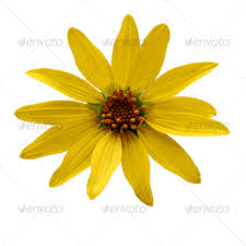 Yellow Flower - yellow flower by ireland1988 graphicriver