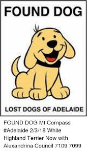 Lost Dog Meme - found dog lost dogs of adelaide found dog mt compass adelaide 2318