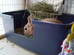 tips litter training rabbits lots information litter