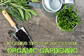 gardening tips genius tips for successful organic gardening