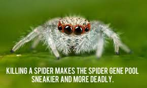 Shower Spider Meme - 27 surprisingly insightful shower thoughts funny gallery