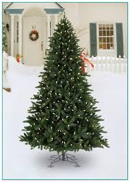 commercial outdoor trees