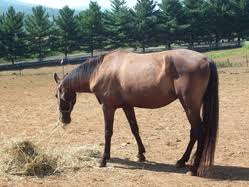 horse care equine pain point release horse pain happy natural
