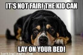 Cool Dog Meme - 17 unforgettable funny dog memes unleashed barking laughs