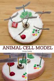 best 25 cell project ideas ideas on pinterest animal cell
