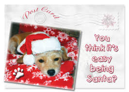 postcards from dogs all