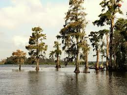 Louisiana scenery images Scenery 2 louisiana department of wildlife and fisheries jpg