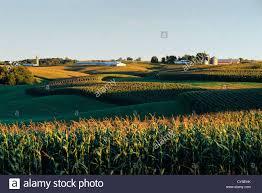 iowa scenery images Scenic farm country in eastern iowa showing tasseled corn and jpg
