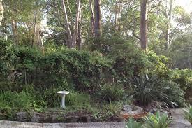 native plant nursery sydney megan seagren u0027s journal planting a native australian shade garden