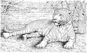 coloring pages of tigers pin by carolanne dubuc on draw ur life pinterest tigers