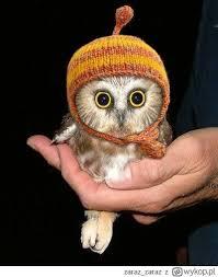 Owl Birthday Meme - 101 best sowa images on pinterest barn owls owls and owl art