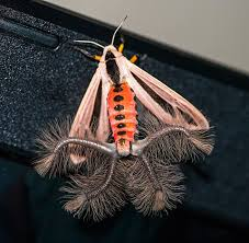 5 animais bizarros moth insects and beautiful bugs