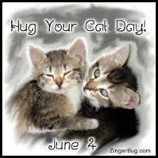 Cat Hug Meme - hug cat day glitter graphic greeting comment meme or gif
