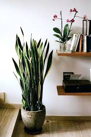 terrific big house plants best large indoor plants ideas on indoor