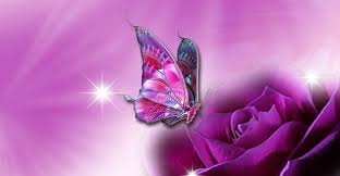 butterfly with pink hi5love viral content