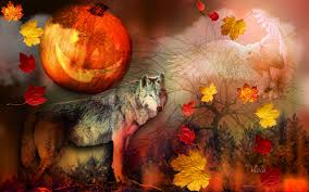 halloween pumpkin backgrounds desktop forests wolf darkness viola moon autumn leaves forest owl