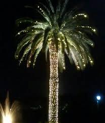 lighted palm tree rainforest islands ferry
