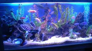 freshwater fish tank decoration ideas youtube
