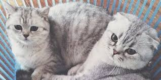 Cat Instagram Roku And Hachi Instagram U0027s Favorite Cat Couple Have Some