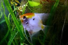 top blogs my aquarium club