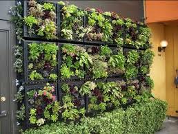 Best Images About  Wall Garden Ideas  Vertical Garden Design - Wall garden design