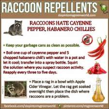 Rabbit Repellent For Gardens by Homemade Rabbit Repellents That Are Stunningly Effective Rabbit