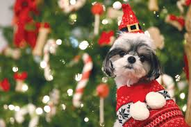 pets are people too remember that at gift time the wilson times