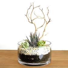 zebra manzanita succulent terrarium kit