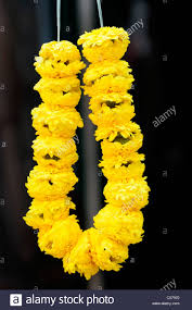 hindu garland fresh bright yellow flower garland sri mahamariamman hindu temple