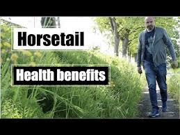 10 health benefits of horsetail herbal medicine youtube