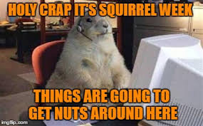 Squirrel Nuts Meme - holy crap it s squirrel week things are going to get nuts around