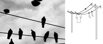 laundry line design birds on a laundry wire clever outdoor clothesline design
