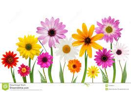 summer daisies stock photo image of beautiful blossom 5340004