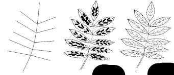 how to draw a leaf step by step how to draw in 1 minute