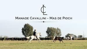 chambre d hote camargue manade manade cavallini de pioch