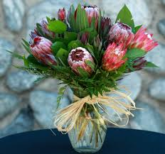 protea flower sugar bush protea bouquet sf127 in claremont ca sherwood