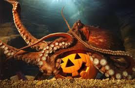 my pet octopus home facebook