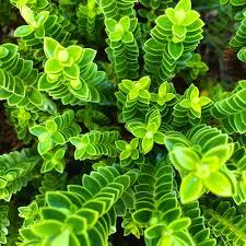 Green Plants Green Plant Columns Photo By Christian Bisbo Johnsen Cbisbo On