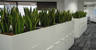 indoor plants singapore indoor hydroculture plant rental and sales iss world singapore