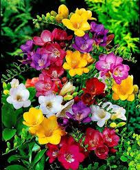 9984 best beautiful flowers around the world images on pinterest