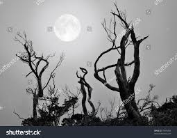 halloween theme background bare trees full moon background scary stock photo 70044436