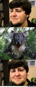 Angry Koala Meme - wet koala by krisuk meme center