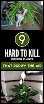 100 air purifying house plants to get rid of toxins indoor air