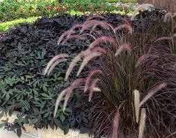 ornament try container of ornamental grasses beautiful planting