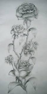 drawn vine rose vine pencil and in color drawn vine rose vine