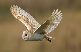 Barn Owl Holidays Denmark House Holidays Norfolk