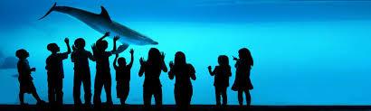 camden aquarium prices coupons pikespeakkids com your resource