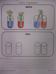 celery experiment celery worksheets and
