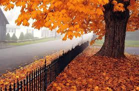 imagenes de otoño para fondo de escritorio fondo escritorio arbol en otoño